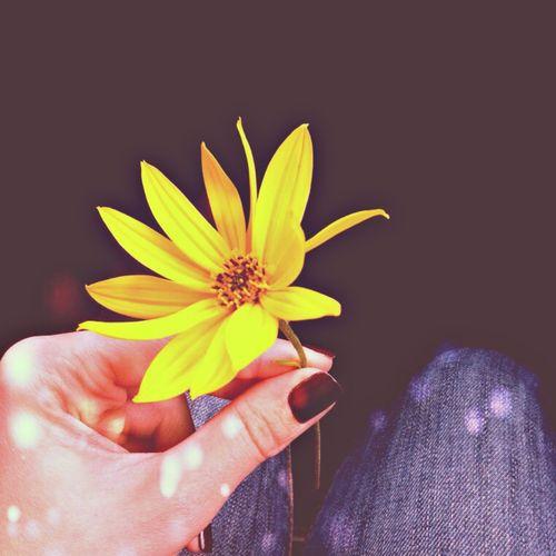 Flower Yellow Flower Yellow Hand Jeans Autumn Mood