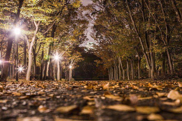 落ち葉のコンチェルト Fall Beauty Autumn colors Fall Colors Nightphotography OSAKA Japan Autumn Autumn Leaves Fall Leaves Autumn Autumn Leaves Tree Sky Leaves Autumn Collection