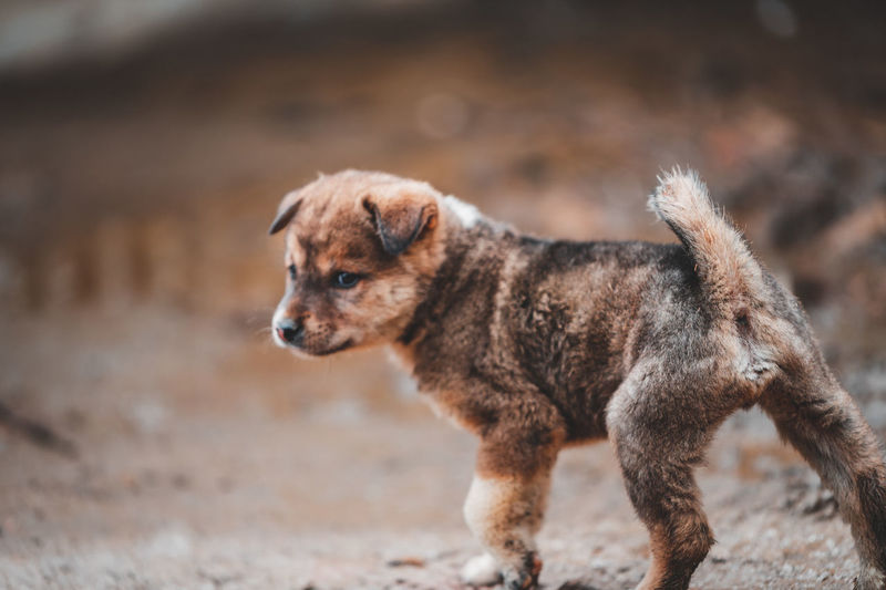 Full length of dog standing on dirt road