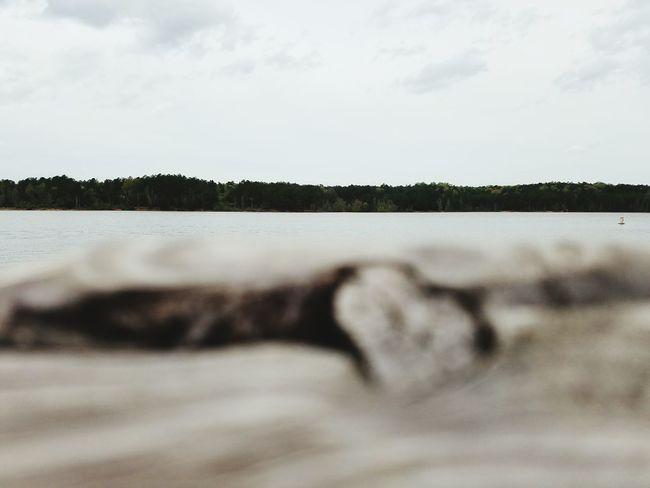 Treeline Waterline Waterfront Lake