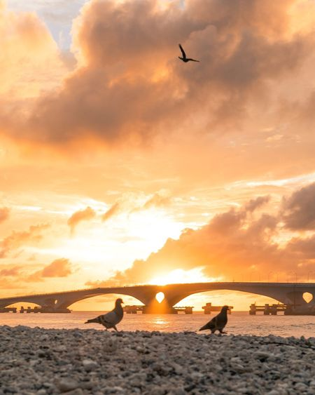 Sunset in Maldives Sunrise Bridge Sky Sunset Water Cloud - Sky Sea Beauty In Nature Orange Color Beach Flying Silhouette Horizon Over Water Real People Scenics - Nature