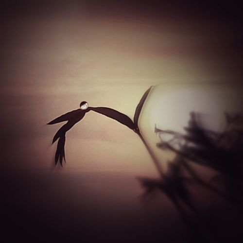 Close-up of silhouette bird flying against sky during sunset