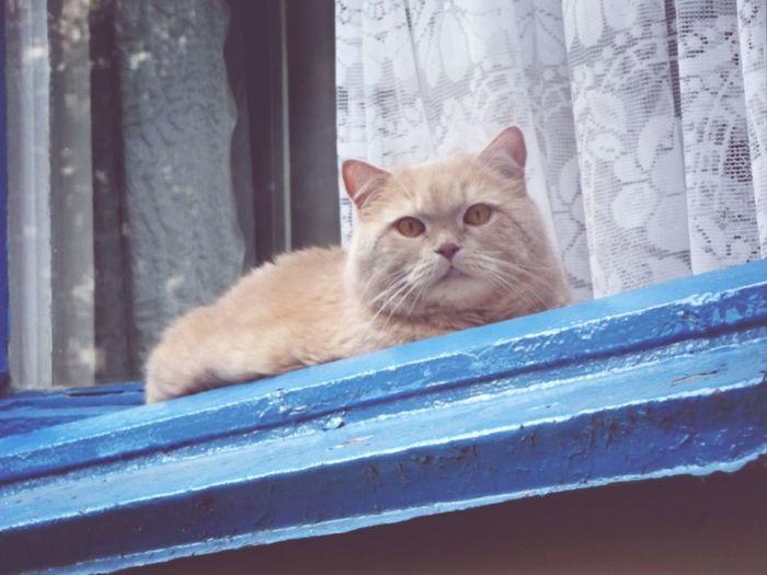 няш кот