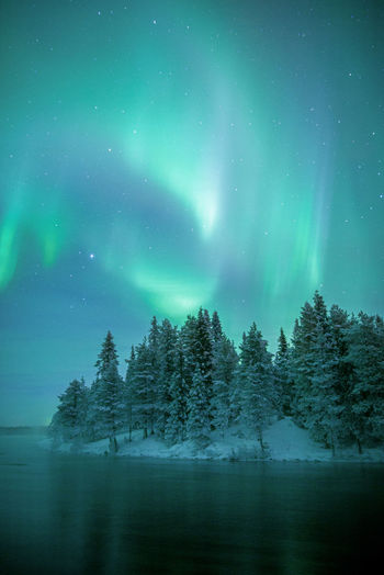 Scenic view of lake by trees during aurora borealis
