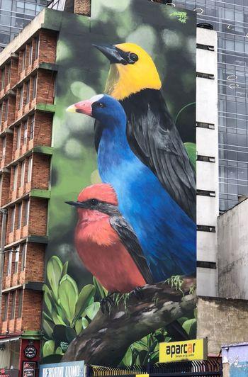 Animal Bird Animal Themes Vertebrate Animal Wildlife Parrot Animals In The Wild