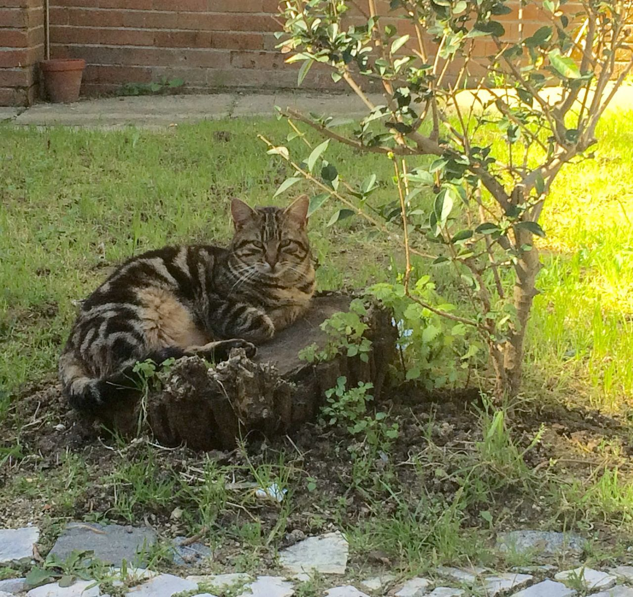 Portrait Of Cat Relaxing On Tree Stump At Back Yard