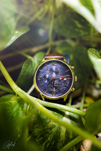 Tommy Hilfiger Watch Watch Watches TommyHilfiger Luxury Marketing Brochure Dream Gift Brand Branding Product Product Photography Photography Goods Cool Advertisement Advertising Advertising Photography Water Full Frame Tree Close-up Green Color Timer Time Smart Watch Stopwatch Instrument Of Time Pocket Watch Checking The Time First Eyeem Photo