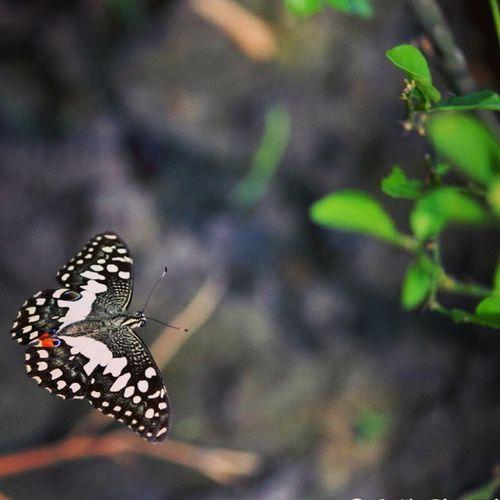 Nature Butterfly Green Macro Photography Nikon7000 Ig_clubaward Wildlife Lover