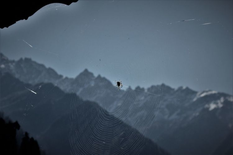Spiders view on how life should be lived. Wise creature's wisdom. Adventure Beauty In Nature Home Sweet Home Home With A View Homemade Mountains Nature Outdoors Sky Spider Wonderous Creatures Wonderous Nature