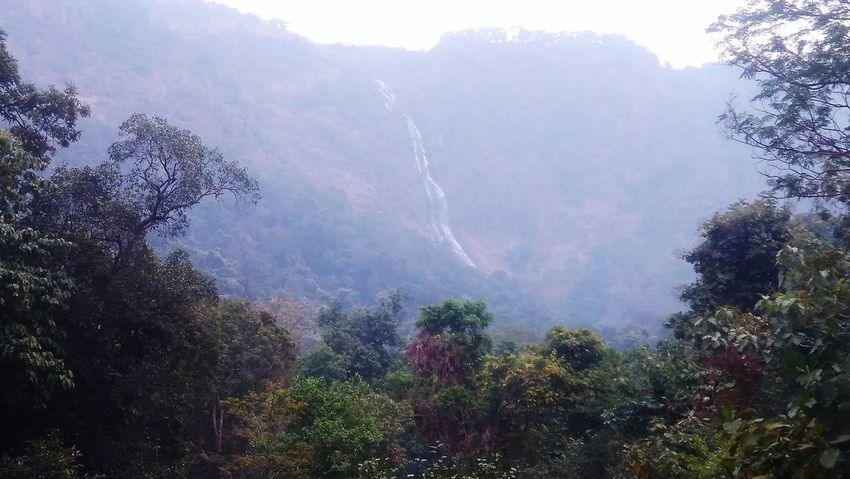 Waterfall Nature Forest Mountain Beauty In Nature
