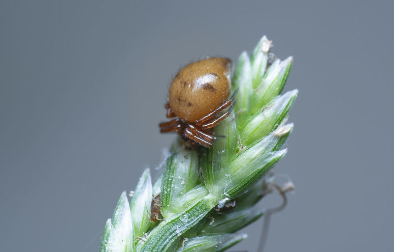 Close-up of insect on plant against gray background