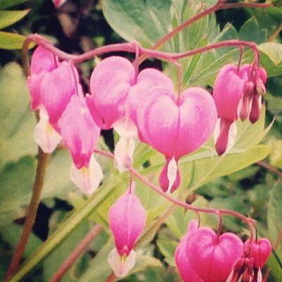 Flowerporn Brokenhearts
