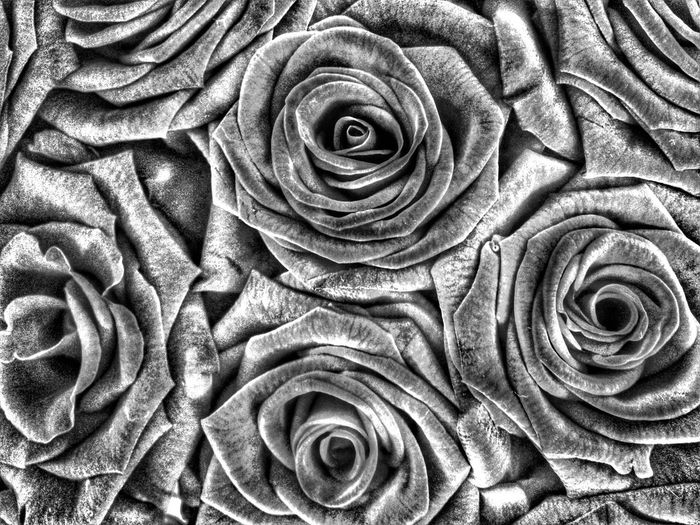 Samsung S4 Phone B&W Collection HDR Flowerporn