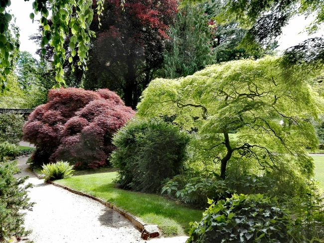 Japanischer Garten In Leverkusen Japanese Garden Germany🇩🇪 Growth Nature Day Outdoors Plant No People Tree Beauty In Nature Grass Freshness Tranquility Landscape The Great Outdoors - 2017 EyeEm Awards Beauty In Nature Growth Built Structure Nature Green Color Plant Tree Place Of Heart