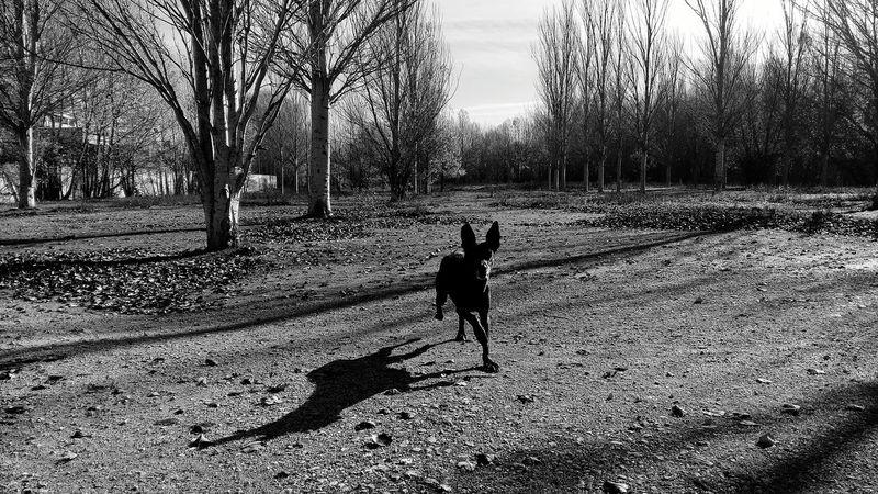 THESE Are My Friends España España🇪🇸 Burgos Black And White Dog Life Dog Love Dogs Blackandwhite Blackandwhite Photography Dog❤ I Love My Dog