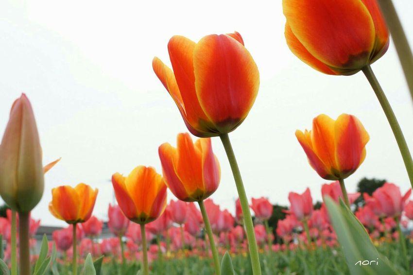 🌷🌷🌷👸🌷🌷🌷Sony α♡Love Flower Flowers EyeEm Flower Flower Collection EyeEm Nature Lover *CHIE* Look UpLandscape Kagoshima