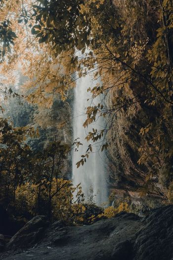 Yellow Rock Beatiful Nature Trees Landscape EyeEm Nature Lover Nature Photography Nature_collection Mexico Travel Leaf Tree Waterfall Water Day Nature Outdoors