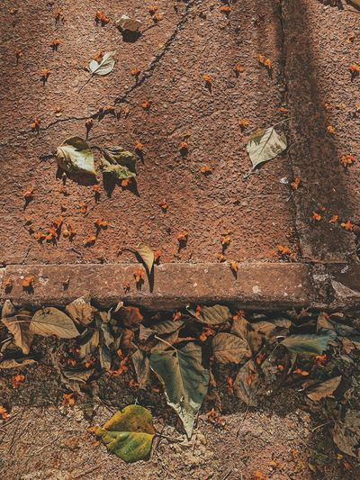 High angle view of dry leaves on wall
