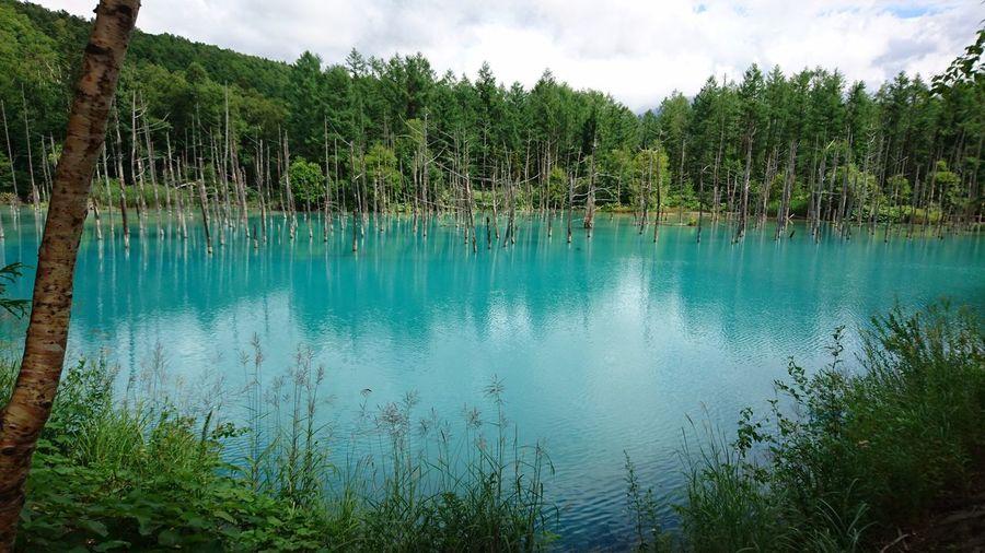 Pond Blue Green