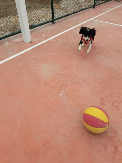 High angle view of person playing with ball