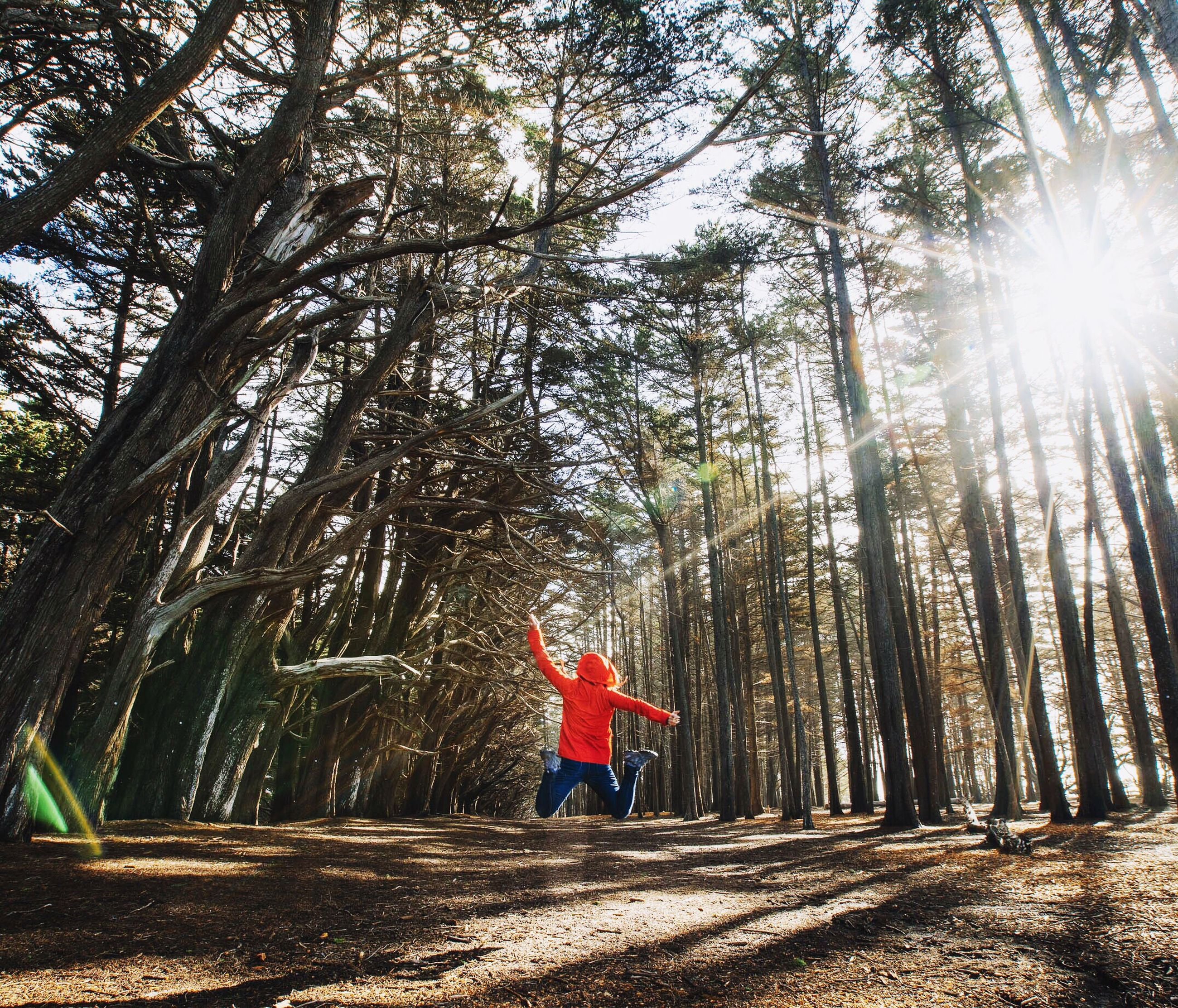 tree, lifestyles, full length, leisure activity, sunlight, walking, sunbeam, rear view, tree trunk, the way forward, casual clothing, growth, person, forest, sun, men, nature, lens flare
