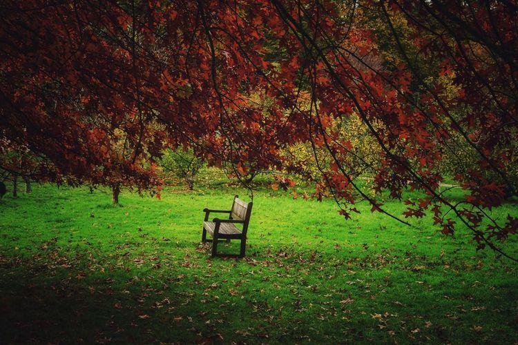 Zen... Tree