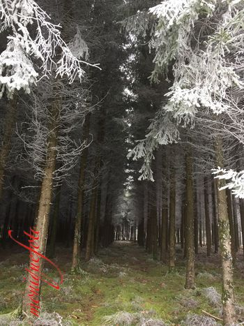 frostige Aussicht 💕💗 Monique52 Waldspaziergang Nature Beauty Frost Frostig Dezember 2016 Forest Outdoors Südschwarzwald