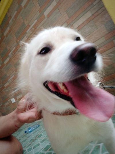 Hogan's smile AdoptDontShop Pets Dog