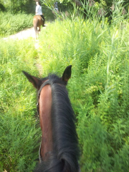 horses are the best!!!!! Allaround Grass Green Growing Horseback Riding