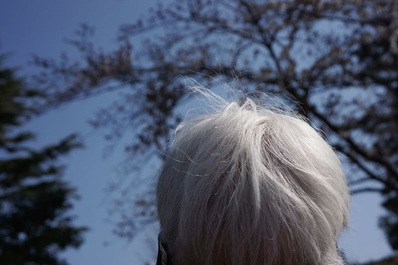 Breeze Wind Rear View Senior Women White Hair Outdoors Day Focus On Foreground Nature Sky Women The Portraitist - 2018 EyeEm Awards