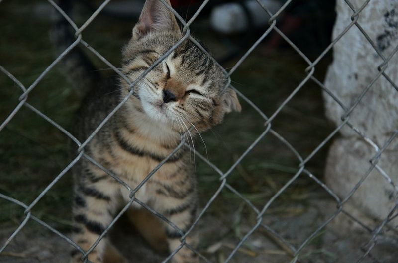 Cat Little Animal Fence Chainlink Fence One Animal Animal Themes No People Stuck Small Kitty Cat EyeEmNewHere Pet Portraits