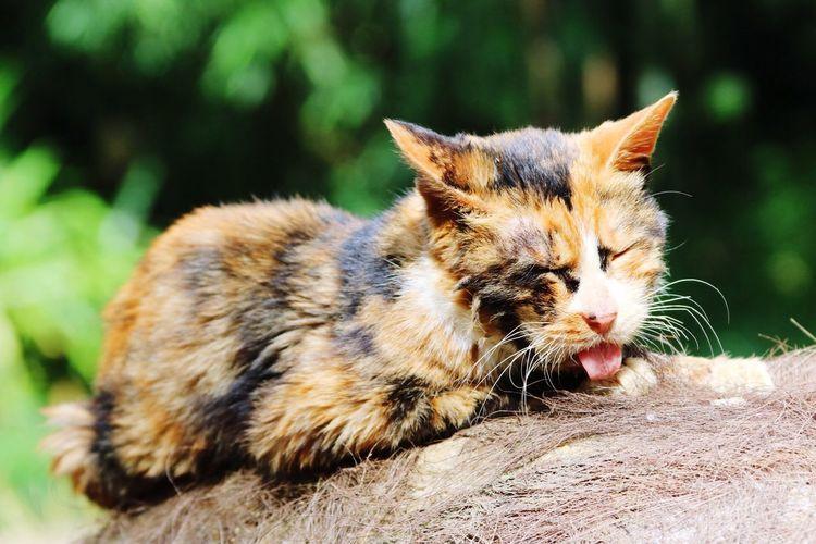 Three Coloured Cat Calico Cat Cats Of EyeEm Lost Cat Lonely Cat