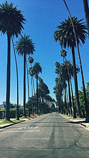 Beverly Hills Views Palmtrees Eyeemphoto Californiaviews Theroadlesstraveled