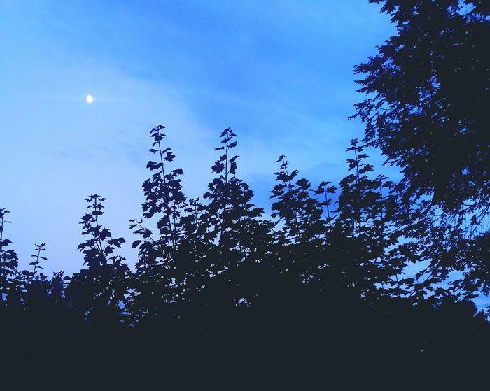 """Moonshine"" Moon Moon Light Summer Views Night Sky EyeEm Best Shots Eye4photography  Moonlight Followme Evening Sky Follow"