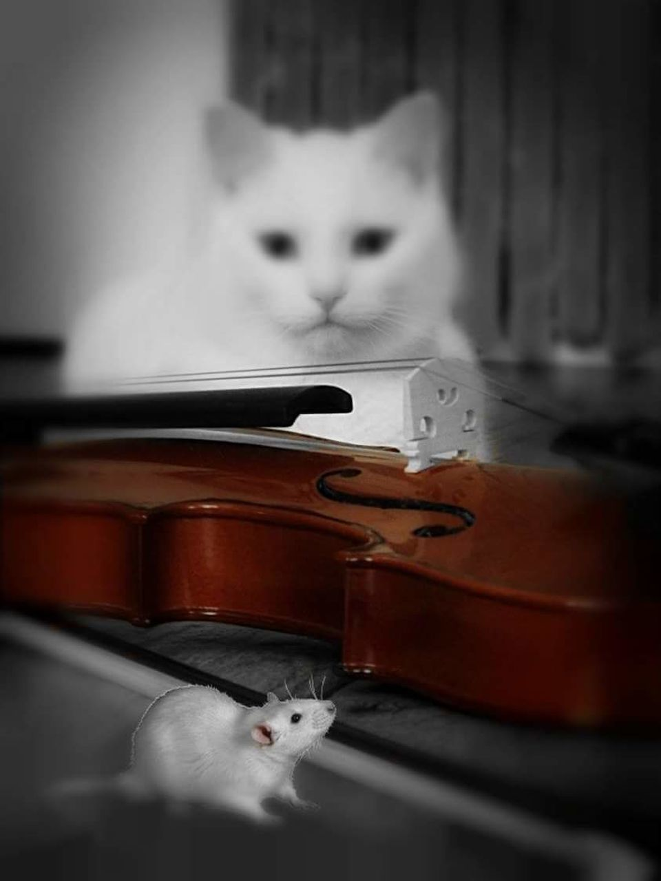 one animal, domestic cat, animal themes, pets, domestic animals, feline, mammal, cat, indoors, whisker, musical instrument, animal, animal head, music, no people, hamster, animal wildlife, arts culture and entertainment, animals in the wild, kitten, technology, close-up, day, bird