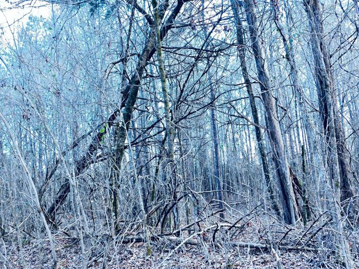 Wintry Woods on Lake Martin, Lovelady Rd., Tallapoosa County, AL, Blue Moon Photography 2018 Beauty In Nature Uncharted Nature Photography Woods In Winter Forest Wandering No People Full Frame Backgrounds No People Pattern Day Nature Plant Frozen Close-up Tree Bare Tree Snow Beauty In Nature Winter