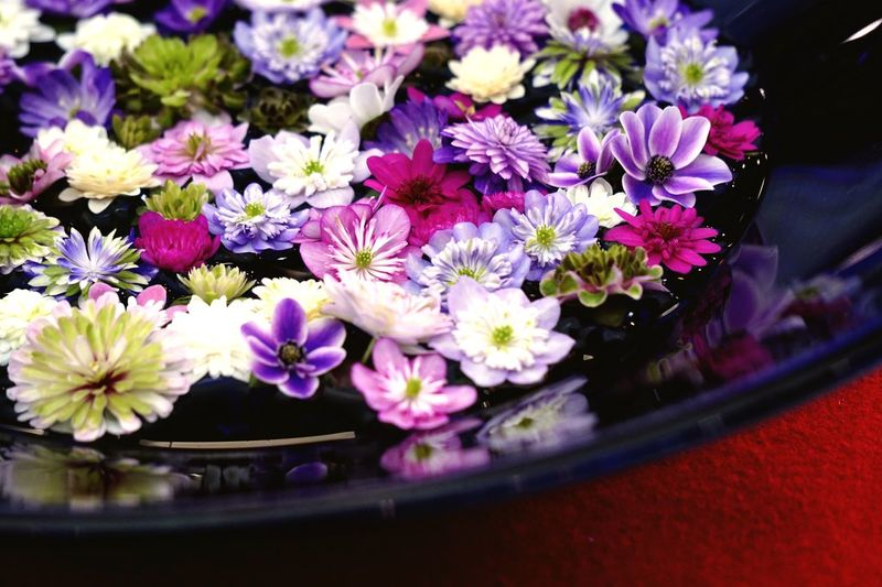 Hepaticas Flower Collection 雪割草 Fragility Flower Head Beauty In Nature