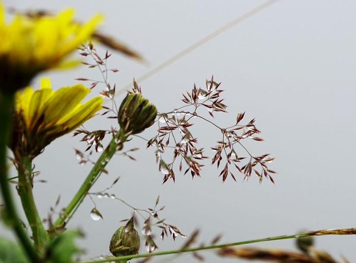 Fog Foggy Flower Living Organism Tree Close-up Animal Themes Plant Plant Life