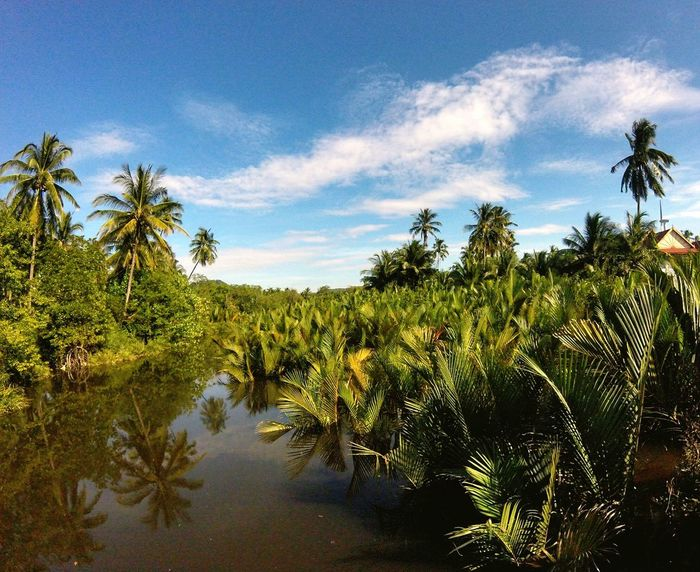 Sur le pont Water Blue Nature Tree Palm Tree Landscape No People Travelling Myanmar Outdoors Sky Tourism Social Issues Natural Parkland Day