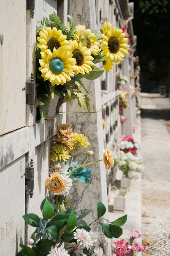 Impression of one of the most famous and romantic cemetaries in the world: the Cemitério dos Prazeres in Lisbon, Portugal. Building Exterior Cemeterio Cemetery Close-up Crematory Day Flower Flower Head Fragility Freshness Grave Graveyard Growth Lisbon Lisbon, Portugal Outdoors Petal Plant Plastic Flowers Portugal Prazeres Rip Yellow