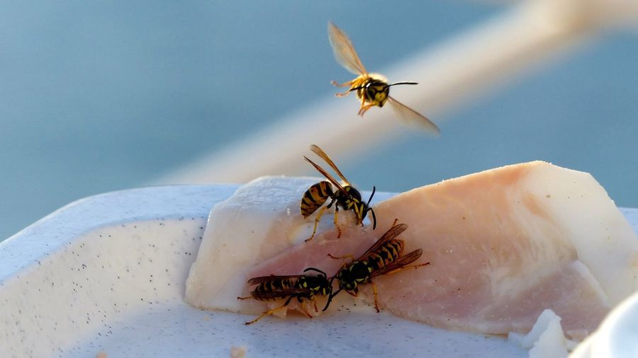 Close-up of wasps flying