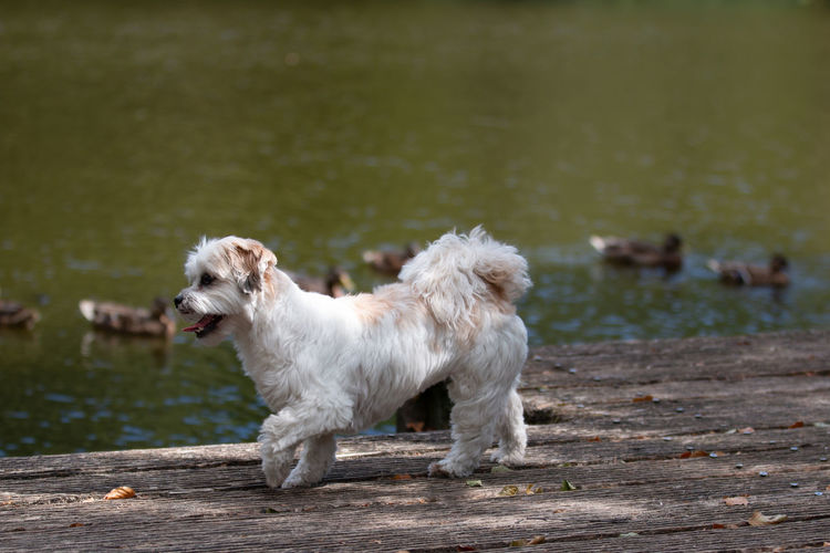 View Of A Dog In Water