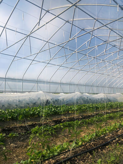 Scenic view of field seen through greenhouse growing organic vegetables