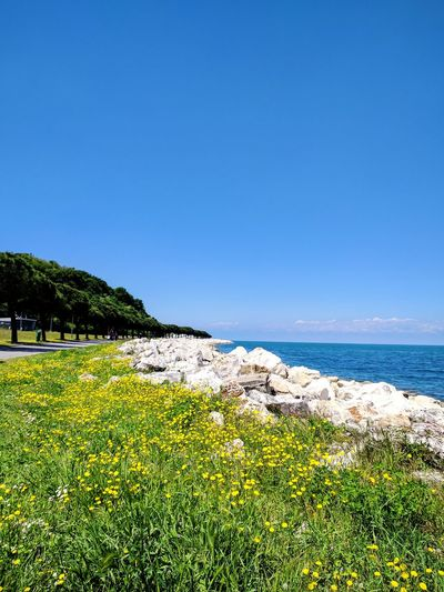 Sea Beach Nature Landscape Clear Sky Tranquility Water Outdoors Grass No People Sky Summer Flower Day Travel Destinations Sea And Sky Sky And Clouds Slovenia Nature Sunny Beachphotography Nature Reserve Rock - Object Beauty In Nature Scenics