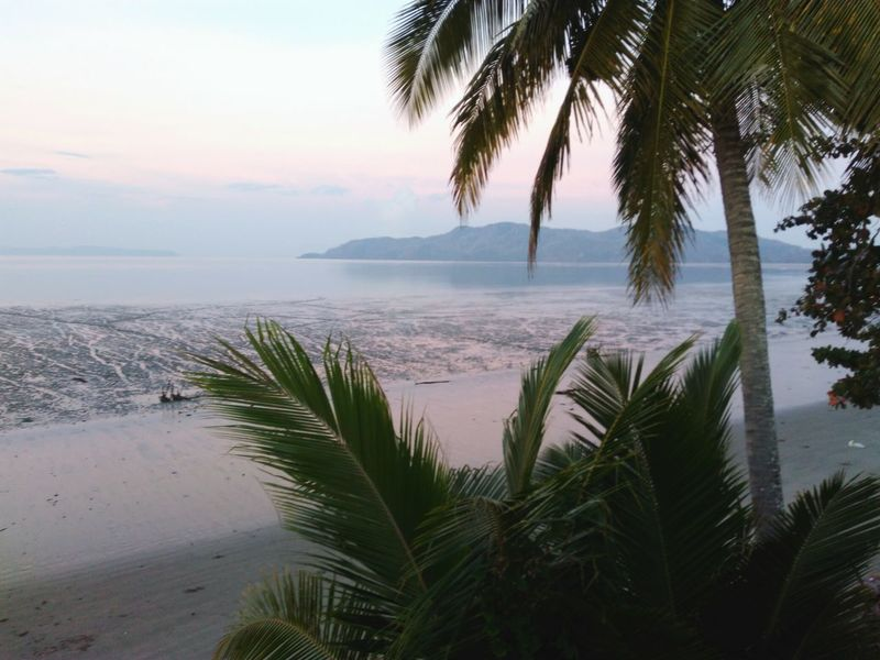 Beach Sea Sand Palm Tree Water Tree Coastline Tranquility Horizon Over Water Landscape Tranquil Scene Vacations Beauty In Nature Sky Tropical Climate Idyllic Nature Cloud - Sky Scenics Travel Destinations