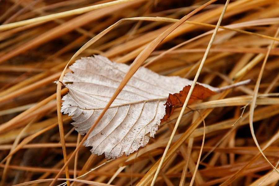 Beauty In Nature Brown Change Close-up Day Dead Plant Dry Focus On Foreground Fragility Grass Growth Land Leaf Leaves Nature No People Outdoors Plant Plant Part Selective Focus Tranquility