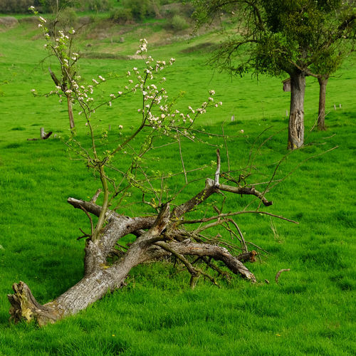 Plant Tree Green Color Grass Land Growth Nature Tranquility No People Field Day Branch Trunk Tree Trunk Beauty In Nature Landscape Environment Tranquil Scene Outdoors Scenics - Nature
