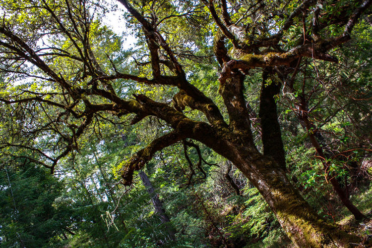 Have you hugged a tree today? Tree Nature Growth Branch Day Outdoors Low Angle View Forest Beauty In Nature Tree Trunk No People Sky Beauty In Nature Instagood Travel Destinations EyeEm Gallery Eyeemphoto Fragility Mothernature Hippy Norcal California Togetherness Photography Symmetry