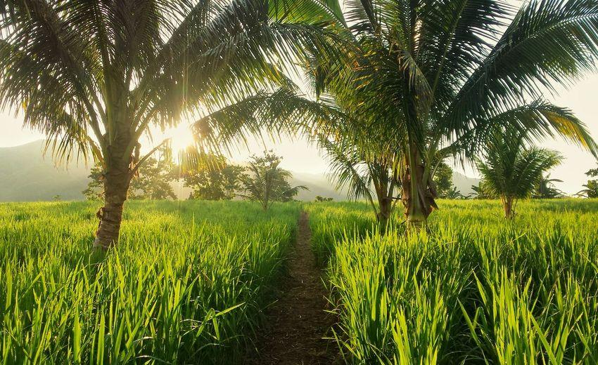 Scenic view of grassy field against bright sun