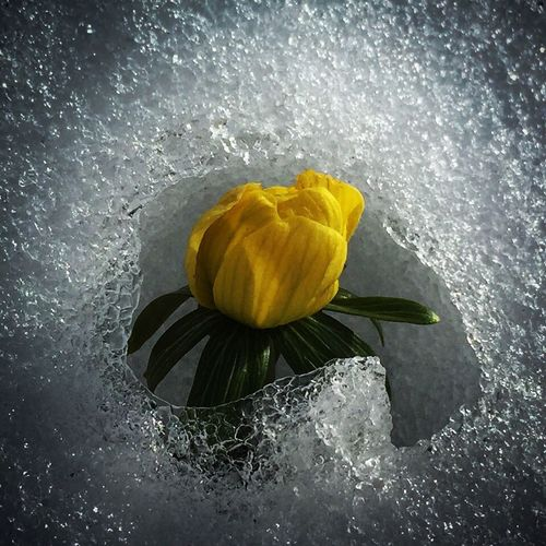 Flowers Snow ❄